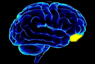 brain26_01